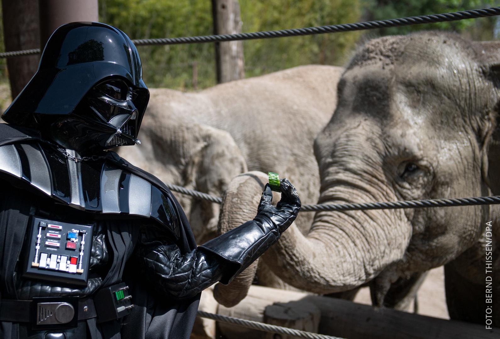 Ein Mann im Darth-Vader-Kostüm füttert einen Elefanten.