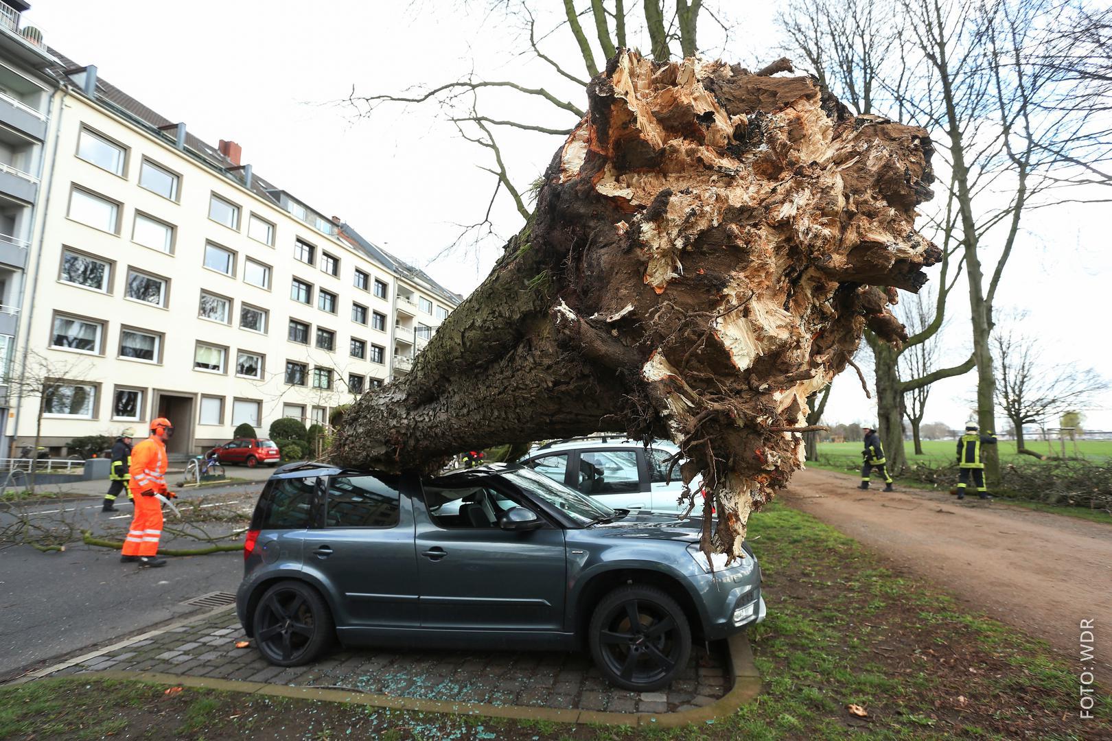 umgestürzter Baum liegt auf Autodach
