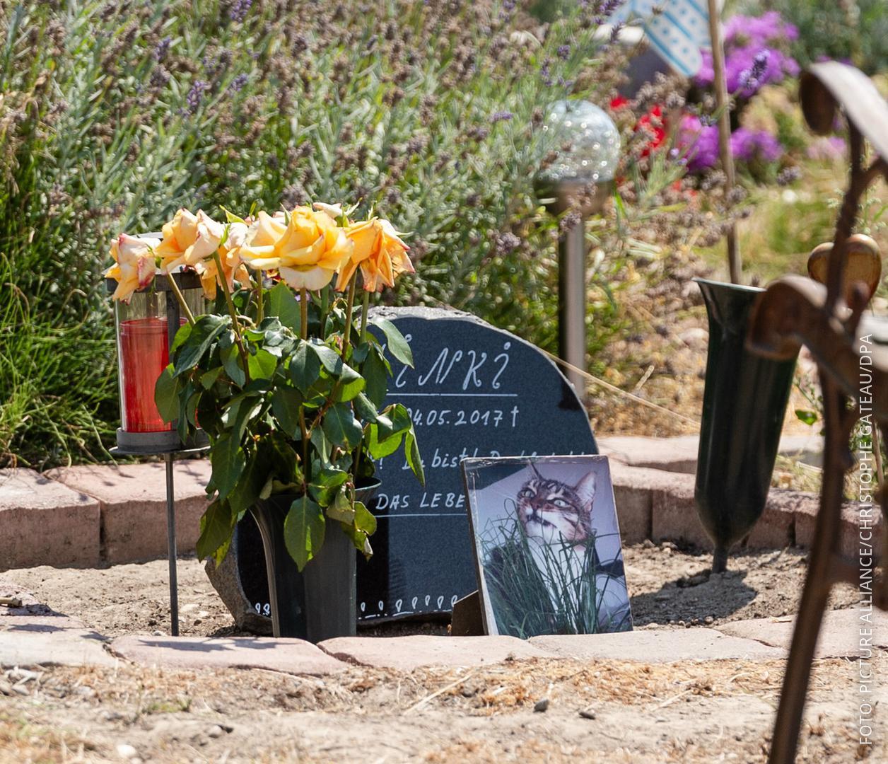 Das Grab von Katze Minki auf dem Tierfriedhof in Mönchengladbach