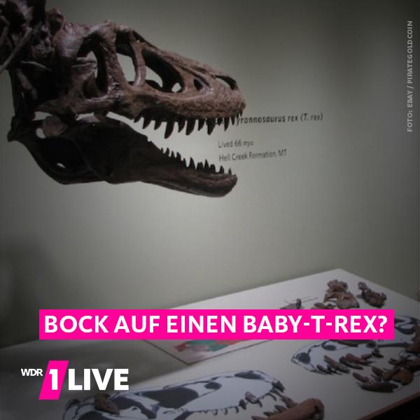 Schädelknochen eines Tyrannosaurus Rex