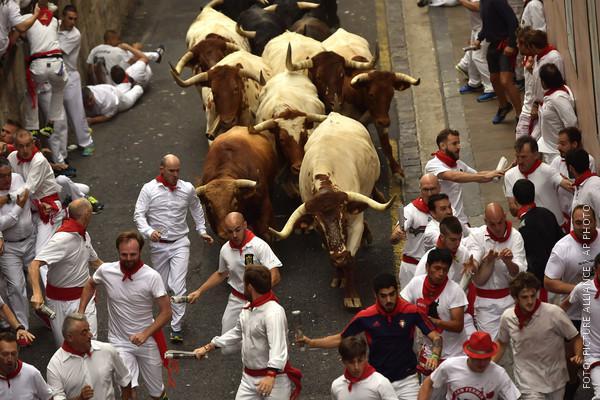 Stiere rennen durch Pamplonas Straßen