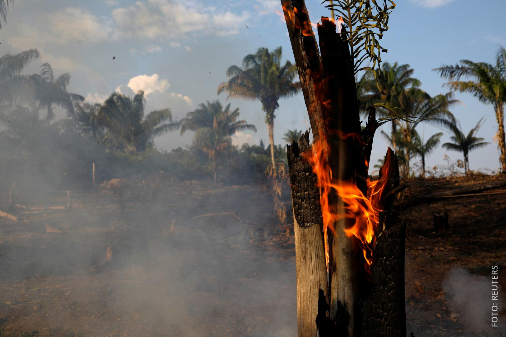 Brennender Baum im Regenwald