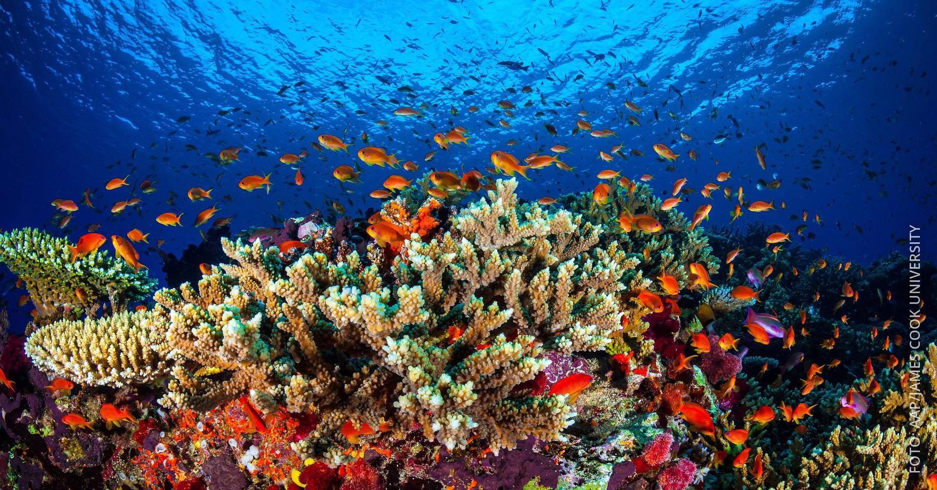 Korallen im Great Barrier Reef, Fische schwimmen herum