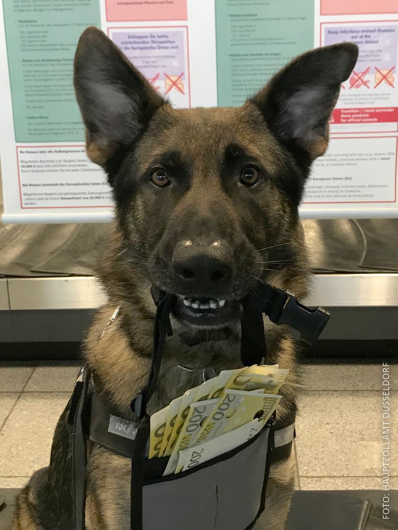 Schäferhund Luke hat einen Beutel mit Geld um den Hals.