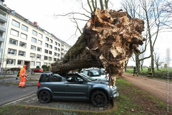 Baum liegt auf Auto
